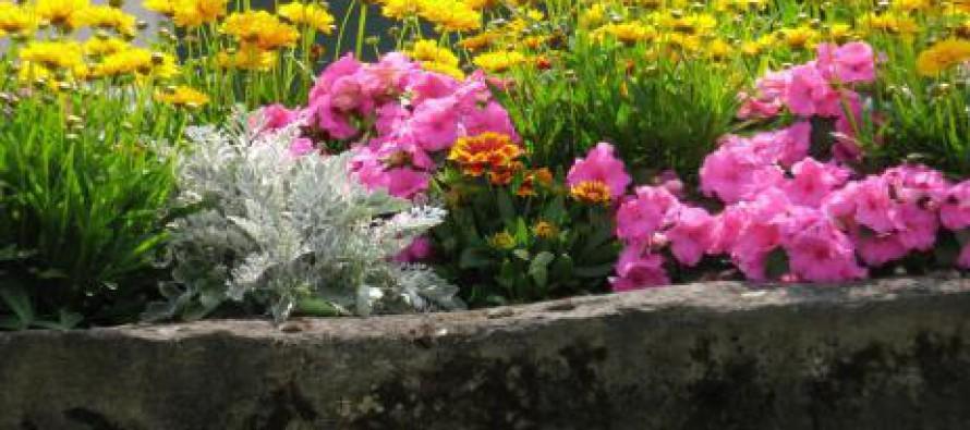 Colocar un arriate en el jard n noticias comunitat - Arriate plantas ...