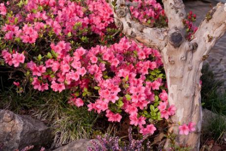 Tipos de flores venenosas
