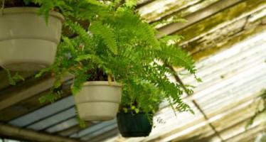 Las mejores plantas para jardines pequeños