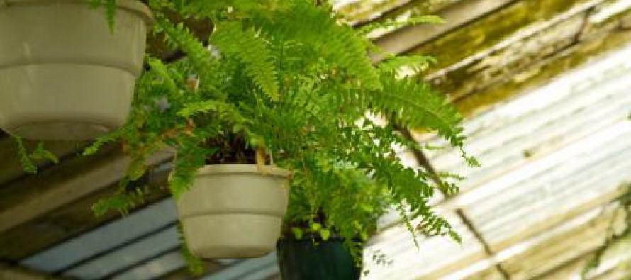 Las mejores plantas para jardines pequeños   Noticias Comunitat ...
