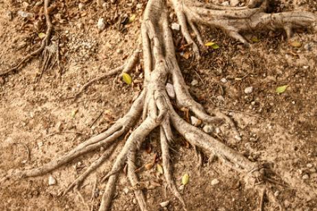 Cómo evitar que las raíces de los árboles dañen el jardín