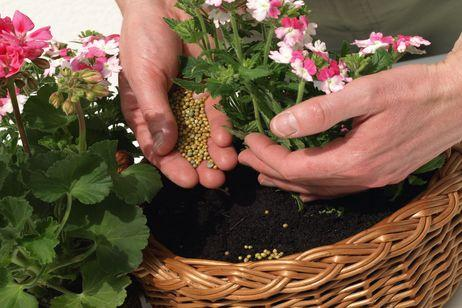 Abonar plantas en verano