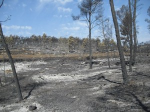 La Generalitat mantiene la Preemergencia por incendios forestales