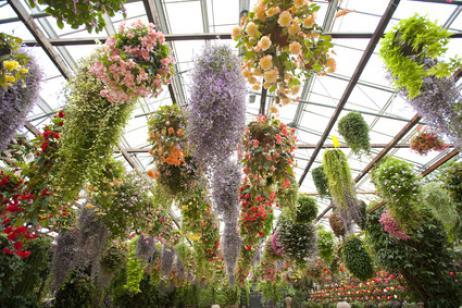 Qué son plantas colgantes
