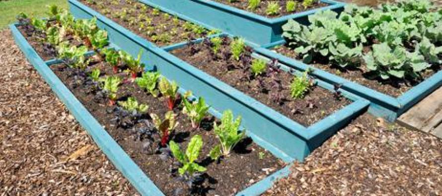 Tipos de jardineras noticias comunitat valenciana - Tipos de jardineras ...