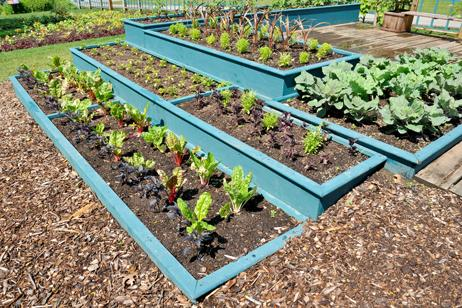 Jardinera cultivo