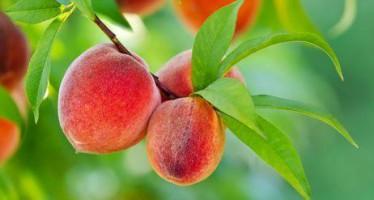 Árboles frutales de septiembre