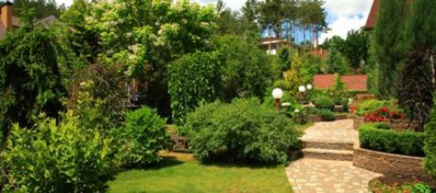 Arbustos para jard n noticias comunitat valenciana for Arbustos de jardin