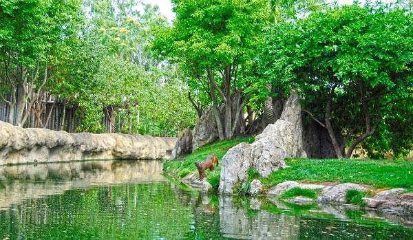 Bioparc Valencia recibe a Ankarana, una hembra de fosa, el depredador de Madagascar