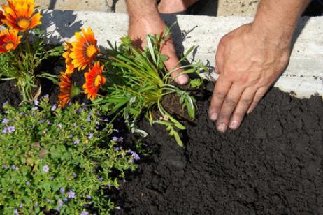 Medir pH suelos