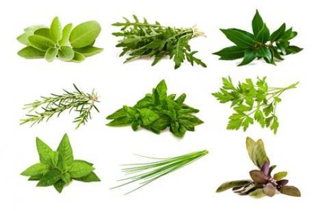 Podar plantas aromáticas