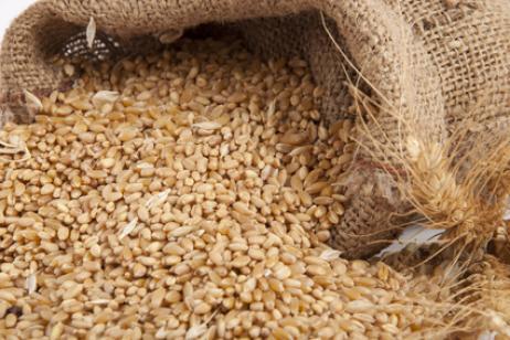 recoger semillas y frutos