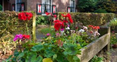 Proteger las flores en otoño