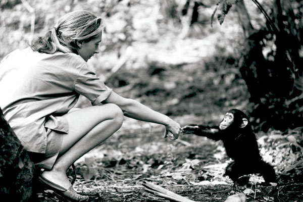 Último fin de semana para ver la exposición de Jane Goodall en Bioparc Valencia