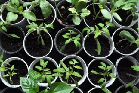 Hacer semilleros