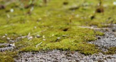 Eliminar el musgo del jardín
