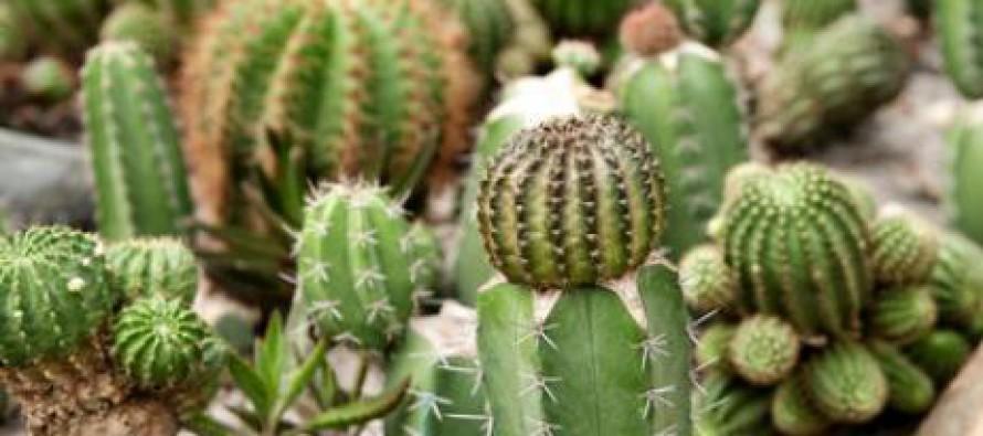 Plantas para principiantes noticias comunitat valenciana - Jardineria para principiantes ...