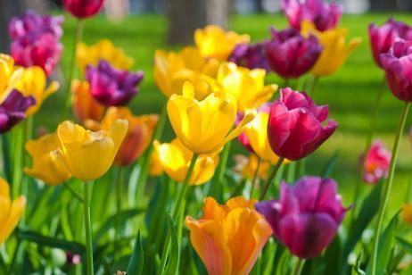Plantas con flores bulbosas