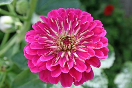 Plantas con flor en noviembre