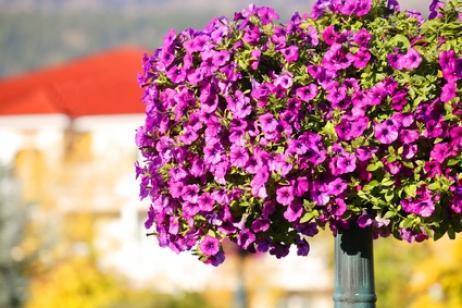 Qu plantas deben permanecer fuera en invierno - Plantas de exterior resistentes ...