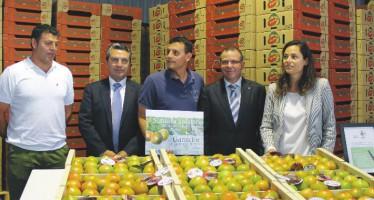 Primera subasta solidaria del primer lote seleccionado de tomates de El Perelló