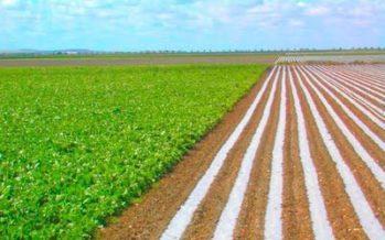 El Consell aprueba el proyecto de ley que fija la futura estructura productiva agraria valenciana