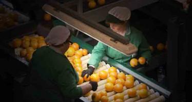 Las personas y la fruta «siempre van por delante» en la RSC de Naranjas Torres