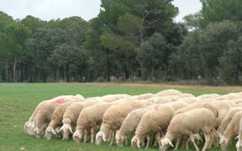 El Consell aprueba un proyecto de investigación sobre ganadería sostenible