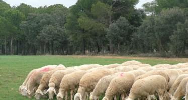 Los ganaderos valencianos pagan cada día 14.000 euros de sobrecoste en alimentación por los efectos de la sequía
