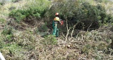 Imelsa recibe más de cinco mil solicitudes para las nuevas plazas de brigada forestal
