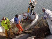El Consell y las cofradías de pescadores colaboran para la retirada de residuos sólidos del mar