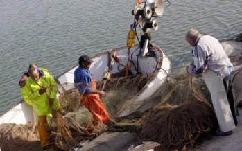 El Consell aumenta un 4,2% las ayudas a la dinamización del sector pesquero