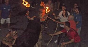 Los festejos taurinos de Yátova registran un herido tras ser golpeado por una vaquilla