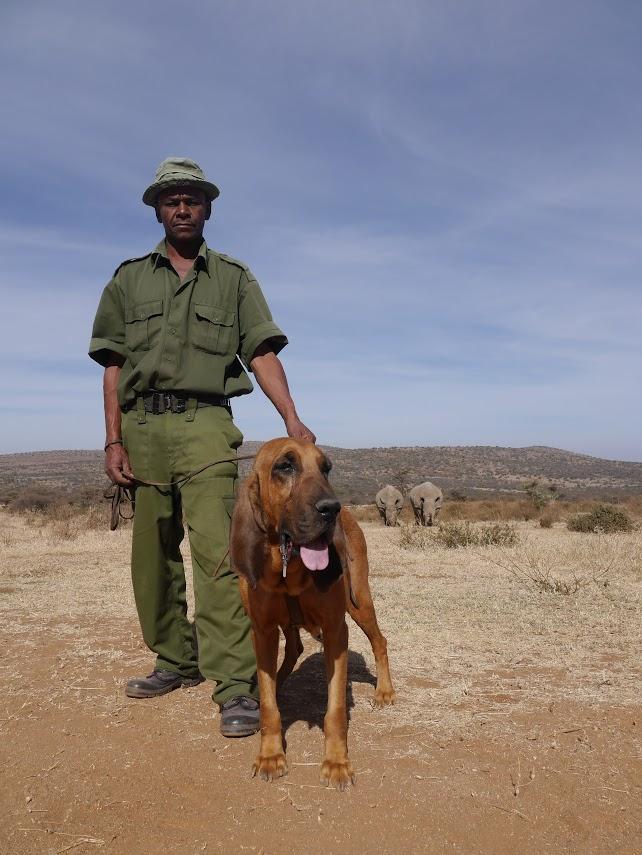 Brigada Nyota, en Ol Jogi (Kenia) con rhinos