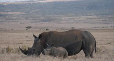 Los fondos de la 3ª Can-rrera de Valencia, para 'Perros que salvan rinocerontes'