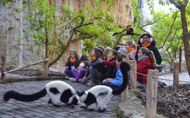 Niños y niñas de Expedición África observando a los lémures - Navidad en Bioparc Valencia - 2014