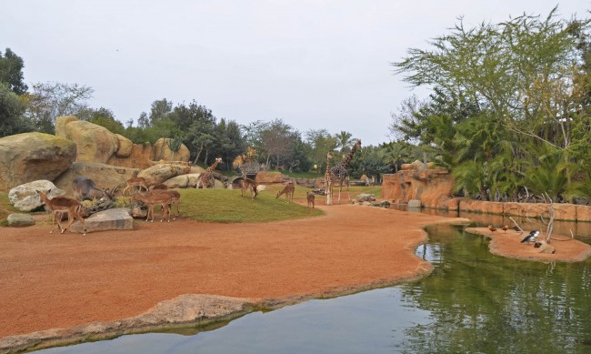 BIOPARC Valencia - Expedición África Navidad 2015 - Expertos en jirafas (6)
