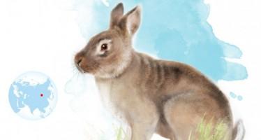 Un antepasado del conejo conecta Europa con Asia