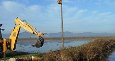 Medio Ambiente y SEO-Birdlife instalan cajas nido para rapaces pequeñas en el Parque Natural Pego-Oliva