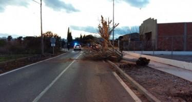 La caída de un árbol mantiene cortada una hora y media una carretera de Burriana