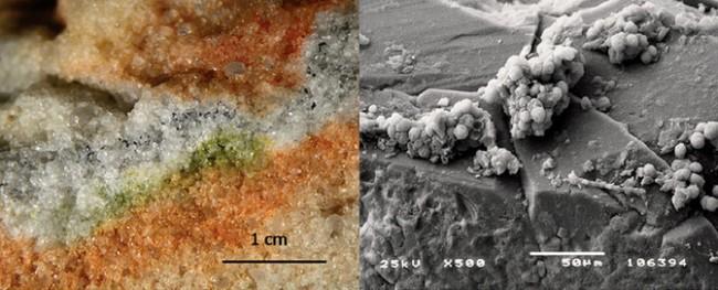 Sección de una roca colonizada por microorganismos criptoendolíticos y detalle al microscopio electrónico de un hongo Cryomyces en cristales de cuarzo. / S. Onofri et al.