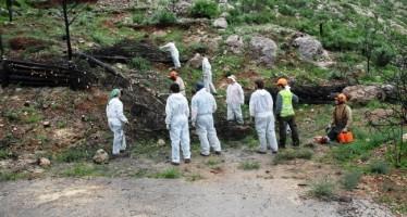 Medio Ambiente aplica las nuevas acciones post-incendio en el territorio quemado de la Vall d'Ebo