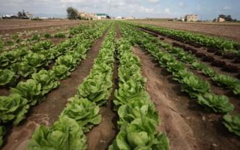 La superficie de cultivo de regadío crece por segundo año consecutivo