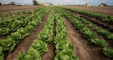 Agricultura recupera las ayudas para la modernización de regadíos