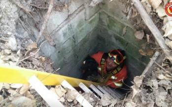 El feliz rescate de un perro en Torre Lloris (Xàtiva)