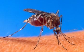 Sanitat confirma el primer caso de enfermedad provocada por el virus zika en la Comunitat