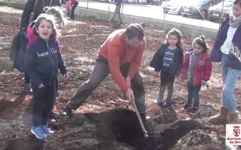 Plantació Popular del Dia de l'Arbre en Denia