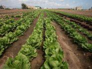 El Consell regula las emergencias alimentarias