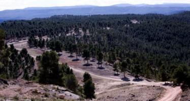 Alrededor de 700 profesionales vigilarán el patrimonio forestal de la Comunitat en Semana Santa y Pascua