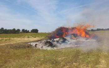 El Consell prohíbe las quemas a menos de 500 metros de terrenos forestales